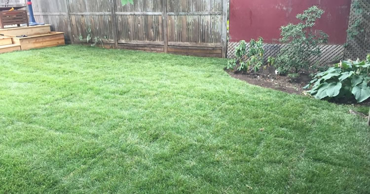 Landscaping Maintenance Nepean and Ottawa